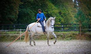 Paard met stok.jpg