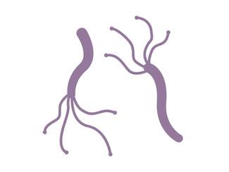 分子栄養学体験談 ~ピロリ菌感染発覚の巻~