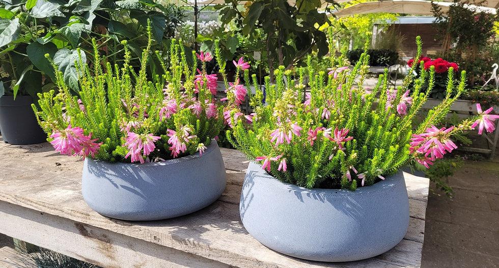 TuinEnKlus4U Beplanting voor tuin balkon en dakterras.jpg