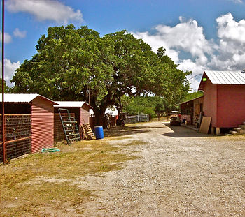 Horse Boarding San Antonio