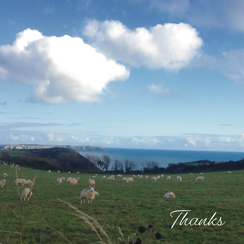 Thank you Greeting card. Photographic Card. Sheep in the field