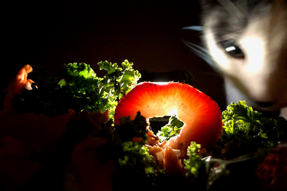 Food Photo - 78.jpg