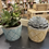 Thumbnail: Mixed large succulents in coloured zig zag
