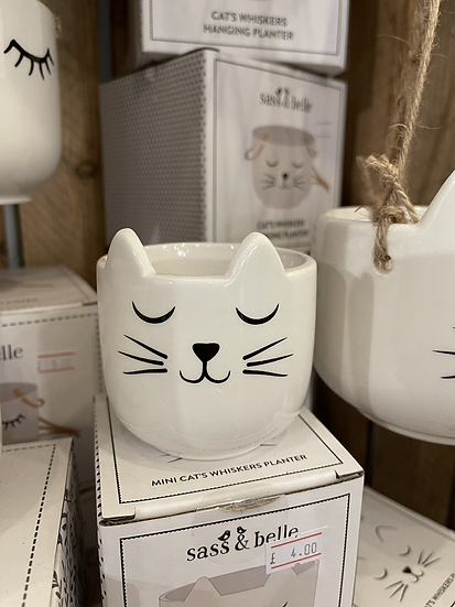 Mini cats whisker planter