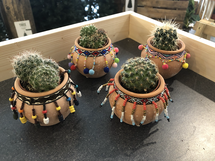 Cactus mix in Mexican style pot