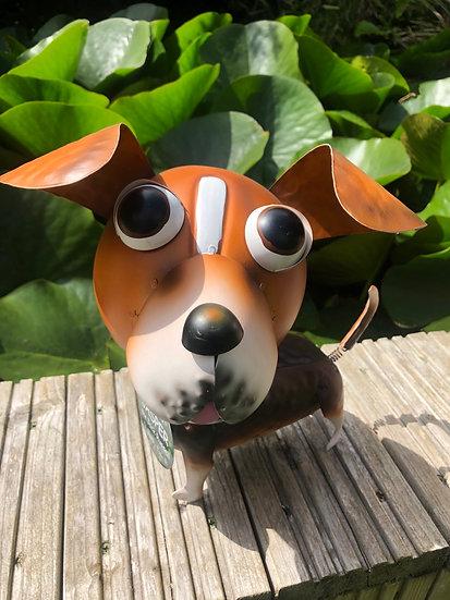 Jasper dog