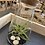 Thumbnail: Decorative air plant in sloped glass