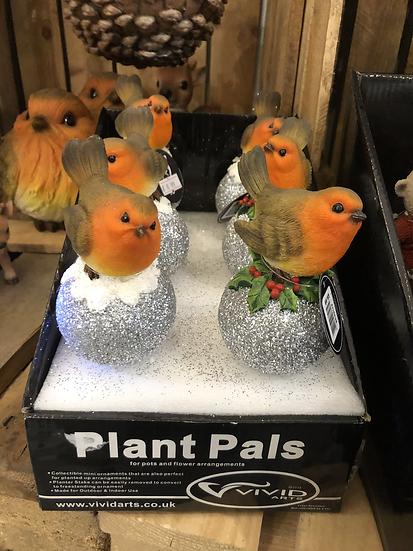 Robin plant pals for pots