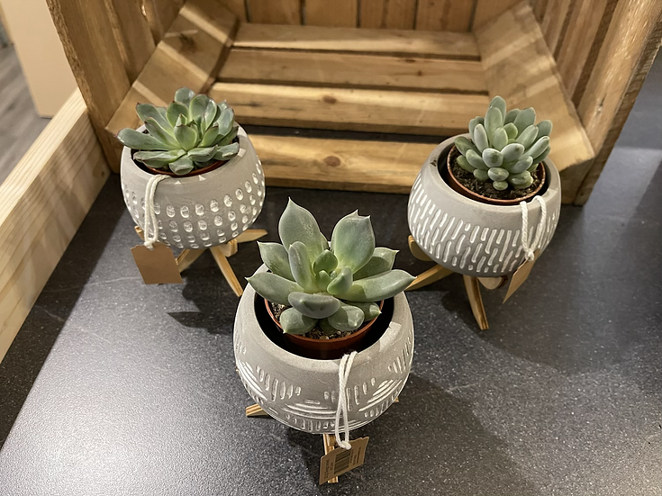 Succulent in concrete bent leg pot