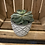 Thumbnail: Succulent in geo concrete
