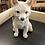 Thumbnail: Snow glitter fox