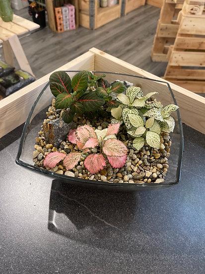 Fittonia square open terrarium