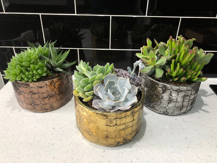 Succulent triple in metal effect pot