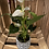 Thumbnail: Anthurium in geo black/white pot