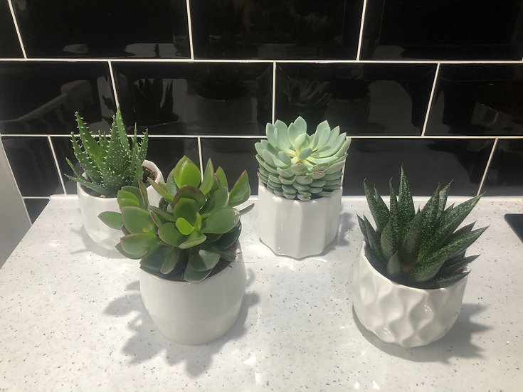 Succulent mix in white patten ceramic