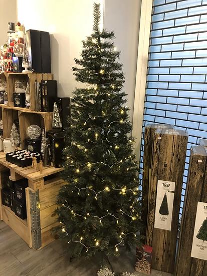 Alberta pine 7ft tree