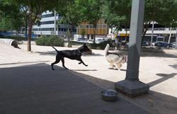 לוקו וחבר מגינת הכלבים