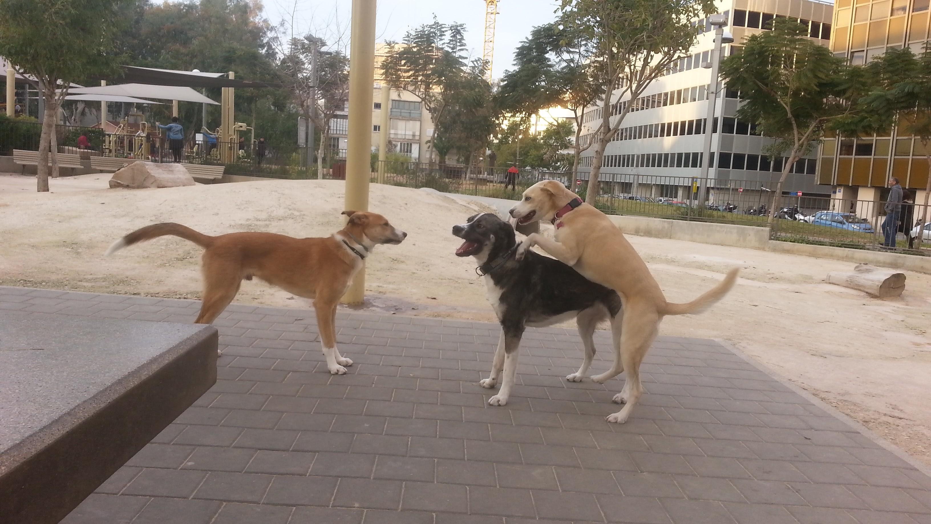 פרג, לוקי ואמה