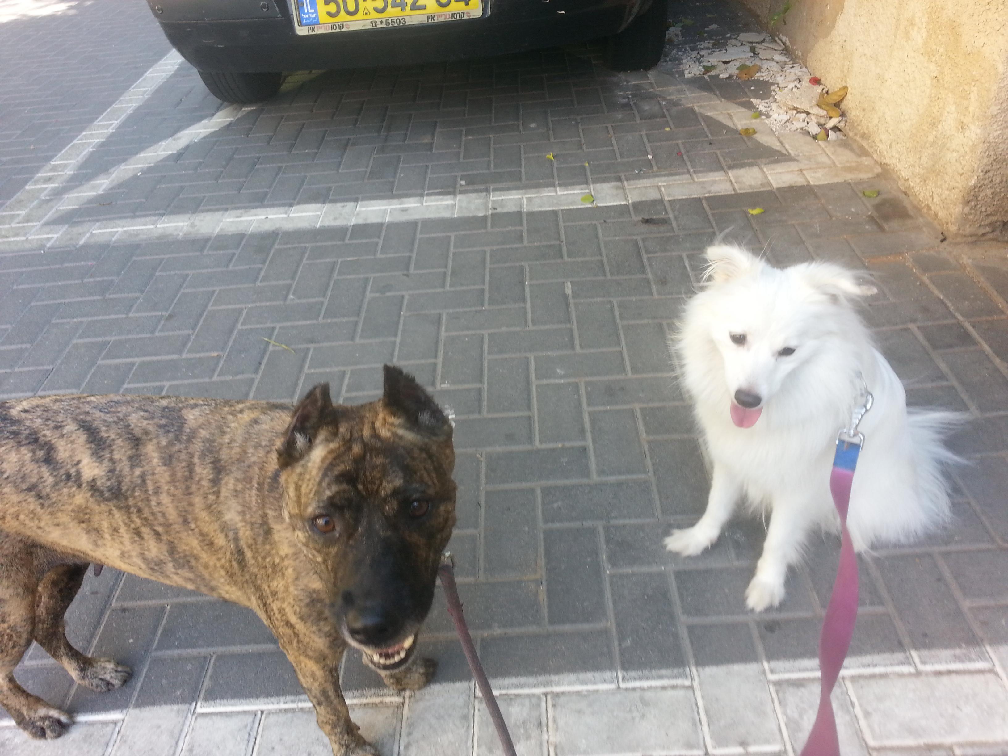 קוקוס ולונה