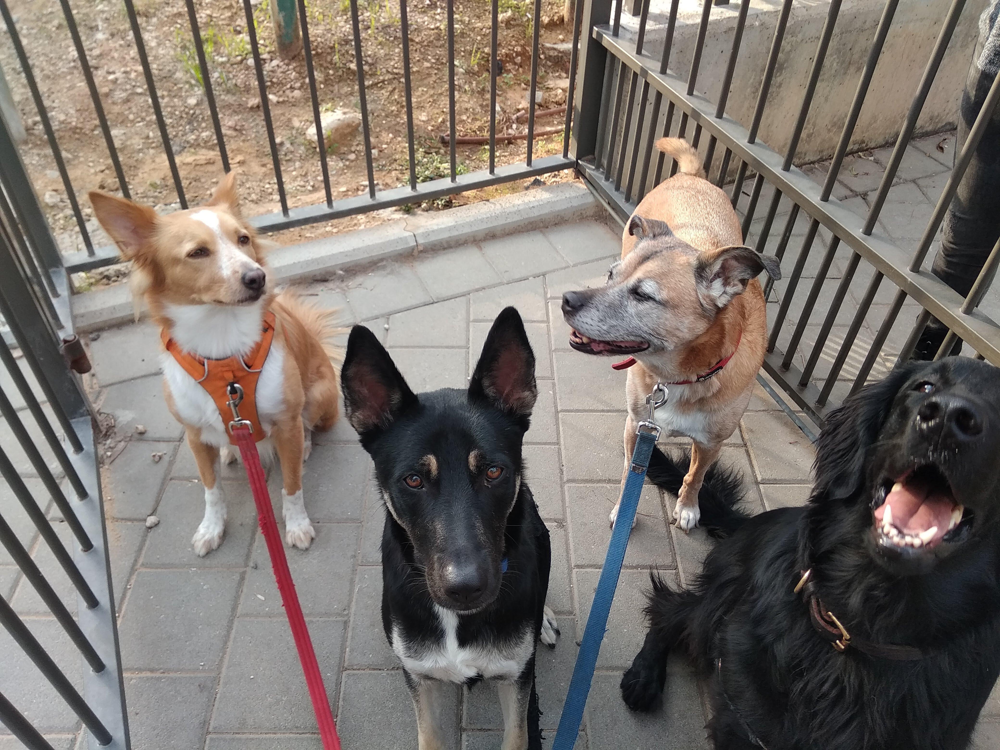 סאגה, אקו, בונו וסופי