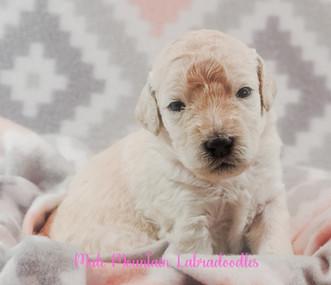 Ahsoka at a couple weeks old!