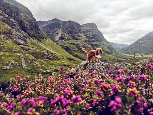 Dog-Friendly Glencoe