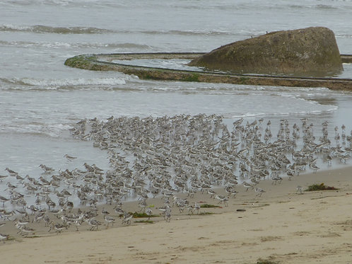 Ven. Beach WW II Gunnery Turret Base w. Shorebirds