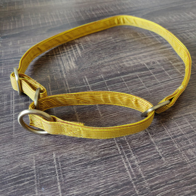 Dandelion Yellow Martingale Collar