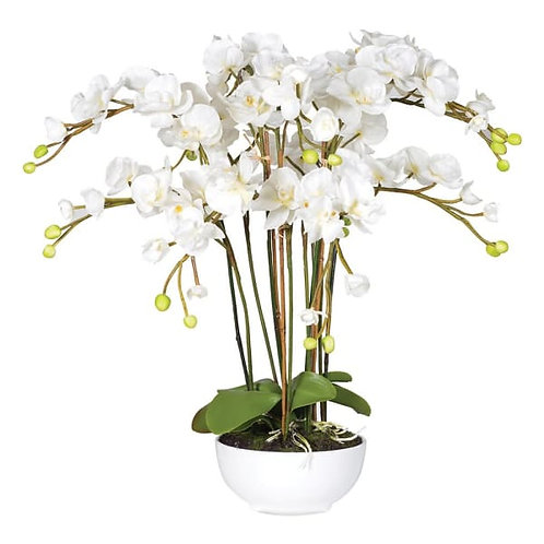 White orchid phalaenopsis large plant in white ceramic bowl