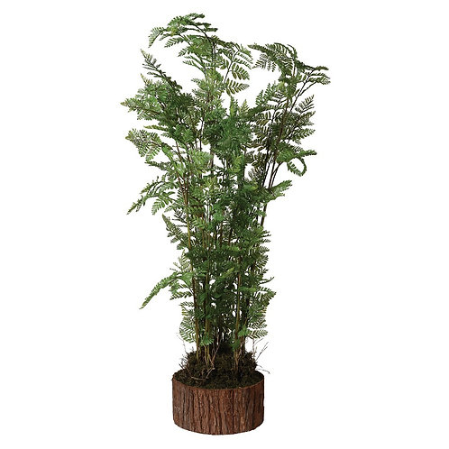 Tall green bracken fern in bark planter