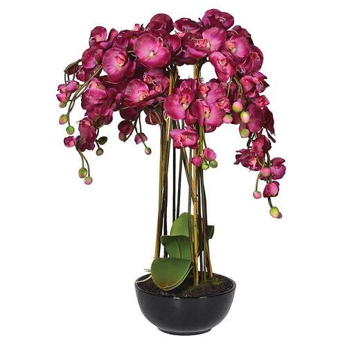 Hot pink orchid phalaenopsis in black ceramic bowl