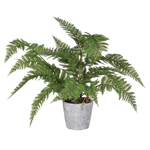 Green bracken fern plant in cement pot