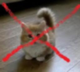 No Cat 1a.jpg