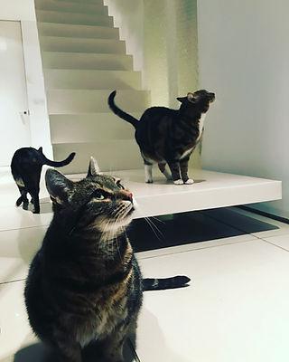 alans house cat 1.jpg