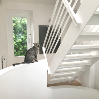 View of the balcony of cat and boxer