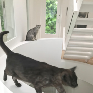 View of landing of void round cutout through the house with cats