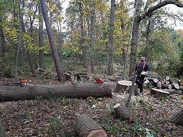 treepic14.jpg