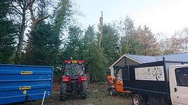 treepic8.jpg