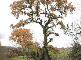 treepic 14.jpg