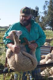 Bill Aveyard at lamb marking