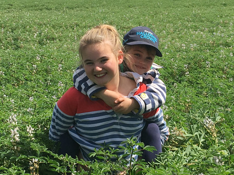 Lily & Evie | chick pea crop at Robbo's 2015