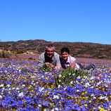 Wildflowers of Namaqualand South Africa