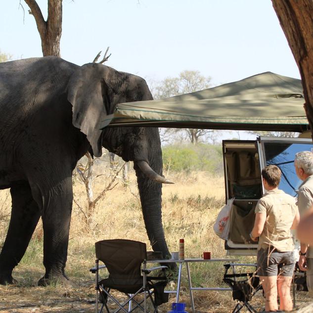 Khwai camp visitor Botswana
