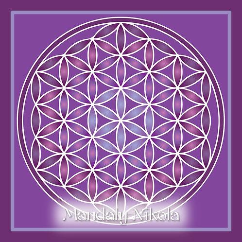 Květ života - fialová