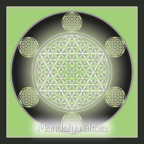Květ života - posvátná geometrie II