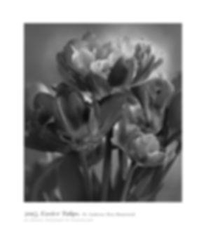Easter Tulips Poster.jpg