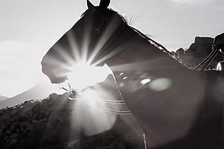 horse light.jpg
