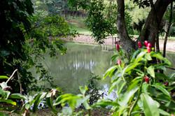 Lago-bosque-pousada-azurita-mg