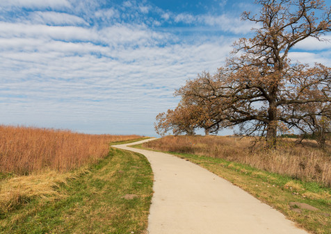 bur oak on trail at beegly property (1 o