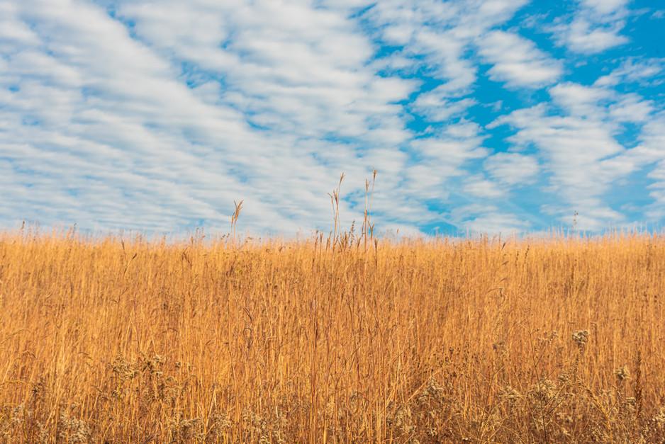 prairie grass up close (1 of 1).jpg